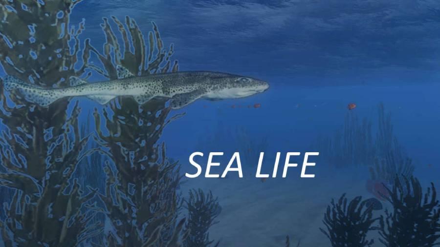 Silent Hunter 4 Sea Life Mod
